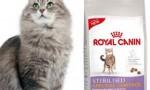 échantillons croquettes Royal Canin